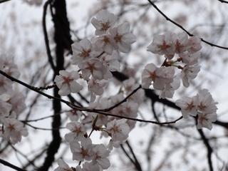 タカオカコシノヒガン2.jpg