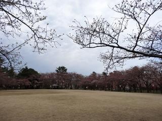 小竹藪広場(1024x768).jpg